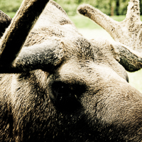 thumbs-moose-02.jpg